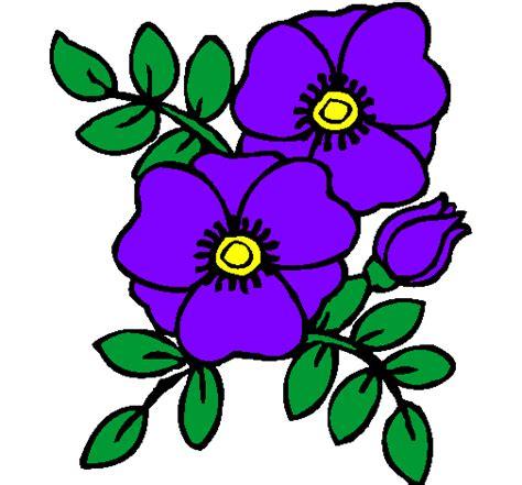 viola fiore disegno disegno papaveri colorato da utente non registrato il 19