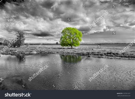 black white landscape green tree stock photo 107351537