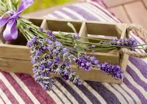 Lavender Home Decor Picture Of Lavender Decorations