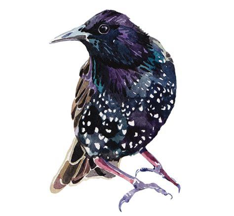Birds Illustration watercolour illustrations exley illustrator