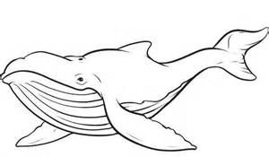 what color are whales whale outline black white lines creatures whales
