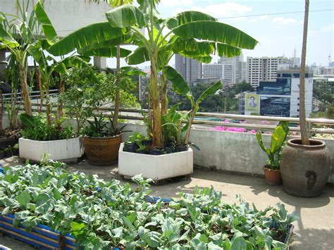 rooftop plants lawn garden small rooftop ideas recommended plants with