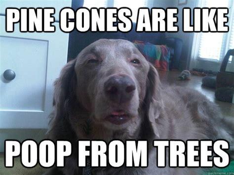 10 Dog Meme - 10 dog meme 14 daily picks and flicks