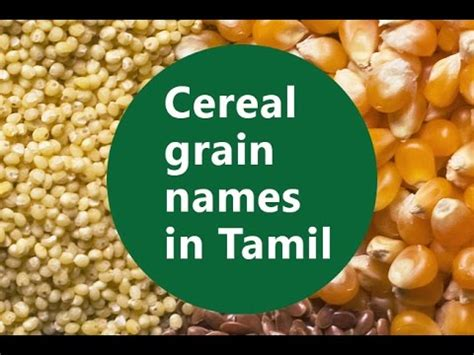 whole grains names in tamil basic level part 3 cereal grain names