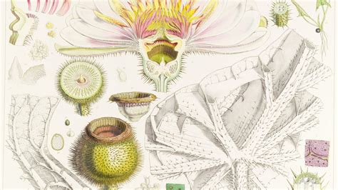 botanical illustration for beginners botanical illustration for beginners kew