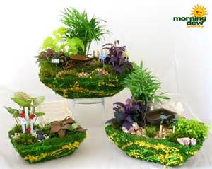 Fairy Garden Containers - dish garden morning dew tropical plants