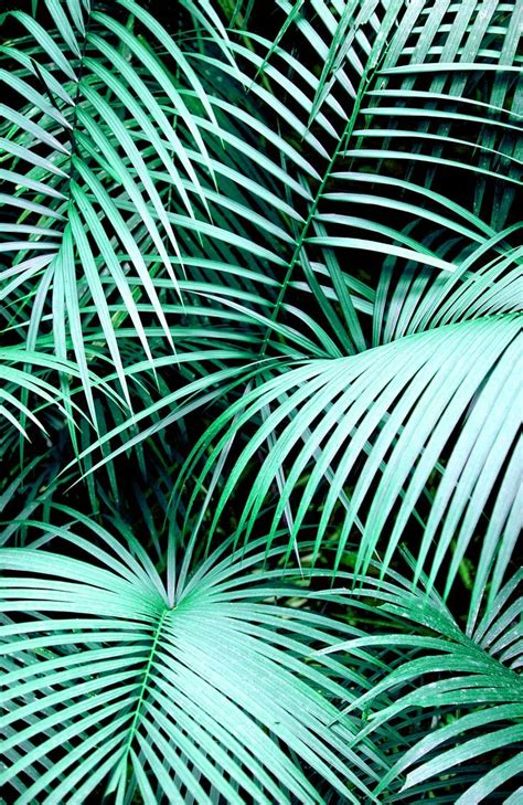 leaf pattern tumblr palm leaves tumblr google search video backgrounds
