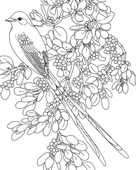 oklahoma state bird and flower az coloring pages