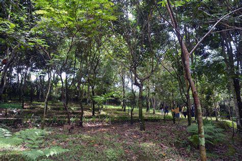 Kebun Bibit Tanaman Lobi Lobi 40cm dulu bau dan mencemari kini jadi kebun konservasi
