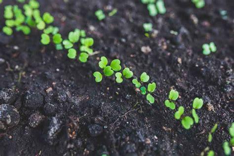 cosa piantare in giardino cosa piantare ad aprile in orto e in vaso e quali lavori