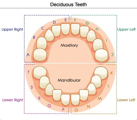Baby Teeth Letters