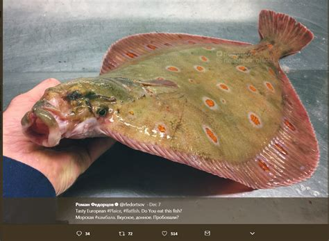 This Fish Looks Like A These Russian Fish Look Like Something Out Of Science Fiction Seattlepi