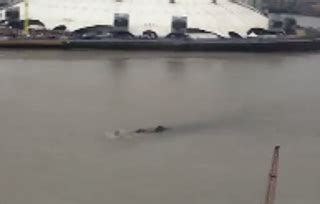 thames river monster large creature seen in thames river the crypto crew