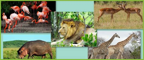 africa photo pack collection african animals