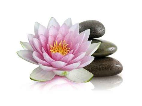 imagenes de flores zen cuadros zen flor del loto