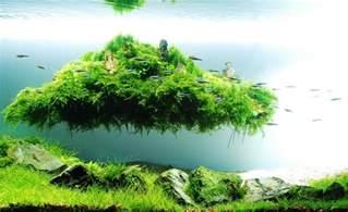 nano aquarium einrichten schritt f 252 r schritt anleitung
