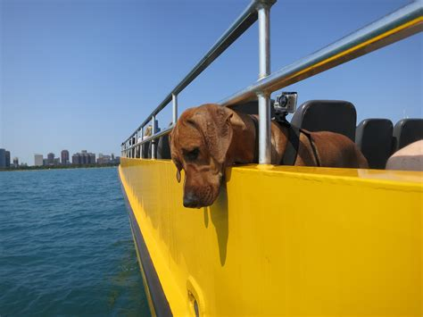 boat hits dog the old sea dog boat ride on lake michigan bucket list