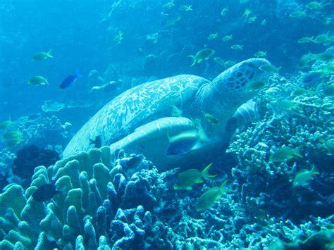 wallpaper keindahan alam bawah laut buzusima blog mengagumi keindahan bawah laut indonesia