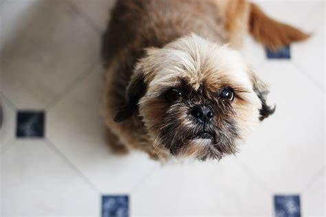 alimentazione corretta cani come offrire un alimentazione corretta ad un di