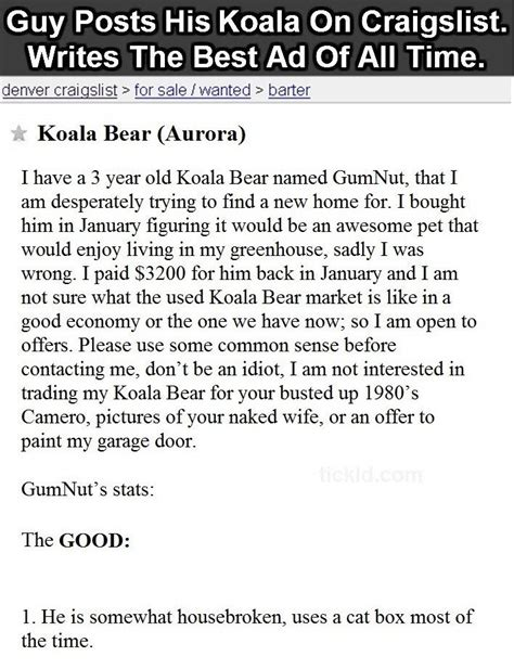 I Posted An Ad On Craigslist This Morning To Rent by Posts Koala On Craigslist In The Most Hilarious Ad You