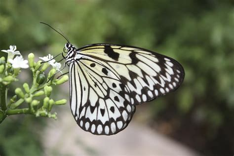 Kite Paper - a really stunning list of 20 animals that are black and white