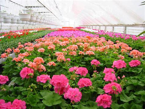fiori liguria fiori e gastronomia della liguria in offerta speciale a