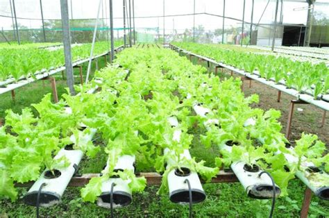 New Pot Hidroponik Wick System Mei hydroponics farming hydroponics equipment co