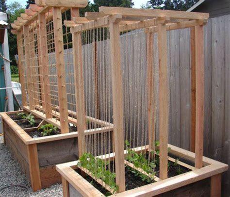 Vegetable Garden Trellis Ideas Pea Trellis Ideas Vegetable And Herb Gardening