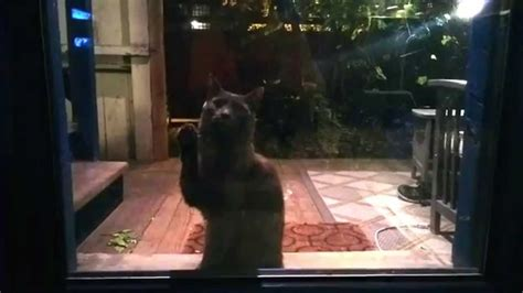 Who Invented The Cat Door by The Reason Sir Issac Newton Invented The Pet Door