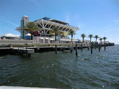 Mba Advisors St Petersburg Florida by Pier Dolphin Cruises St Petersburg Fl Top Tips Before
