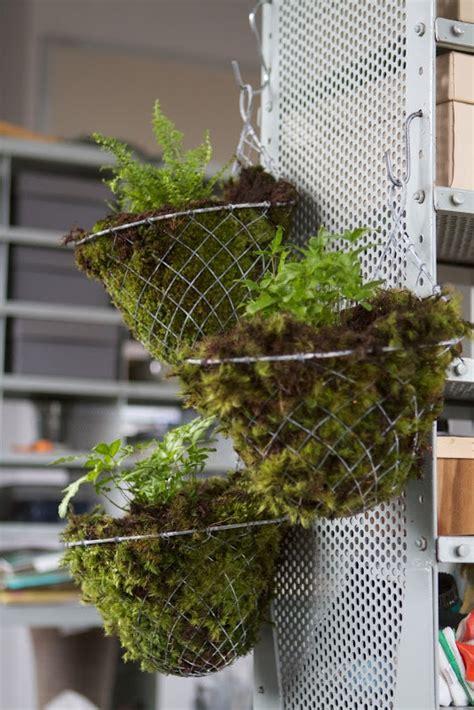 Make House Plã Ne Kostenlos by How To Draw Mosses Plant
