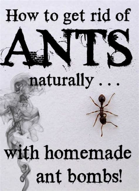 how to get rid of small ants in bathroom how to get rid of tiny ants in bathroom 28 images best