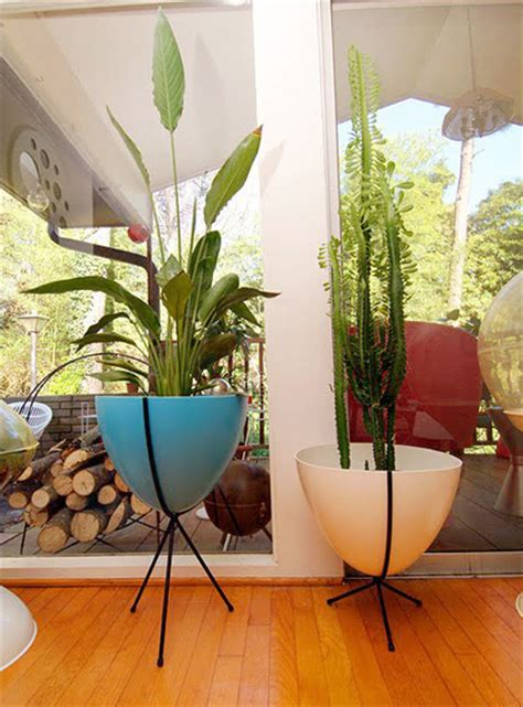 modern houseplants mid century modern plants www pixshark com images