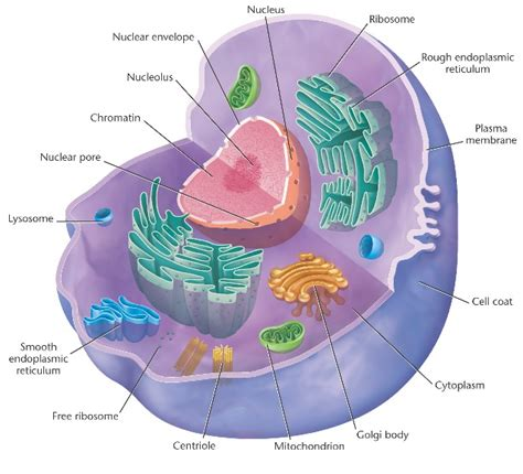 All Sections Of by Cell Parts