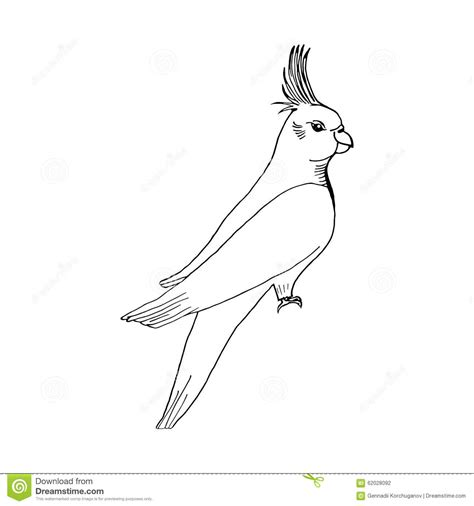Hand Draw Parrot Sketch Style On A Black White Stock Vector Illustration Of Exotic Image Vector Image Black White Sketch