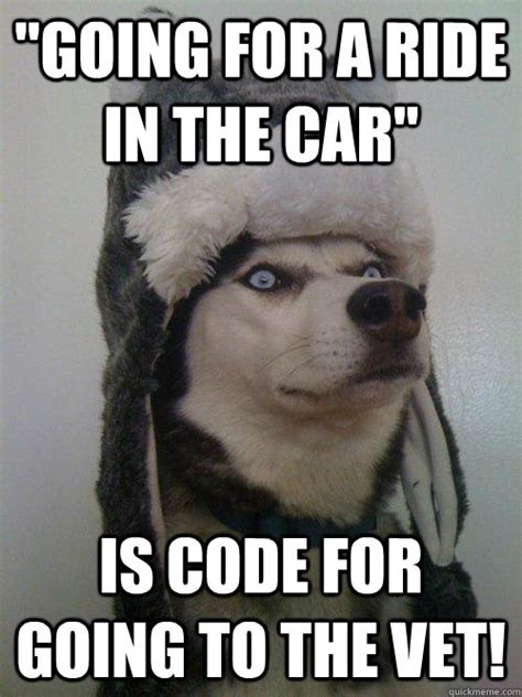 Dog Vet Meme - quot going for a ride in the car quot is code for going to the vet