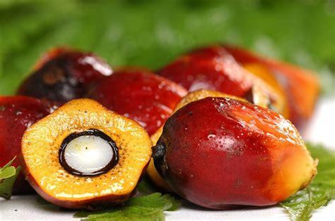 Minyak Kotor Kelapa Sawit 7 manfaat minyak kelapa sawit untuk kesehatan tubuh