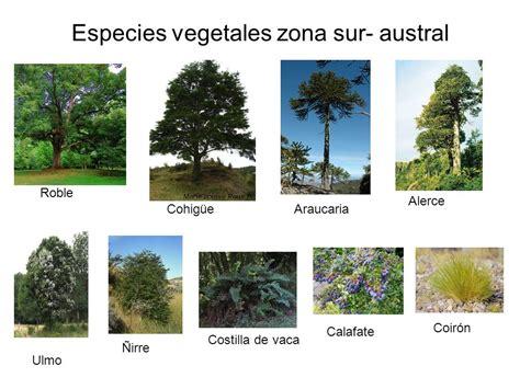 fauna de la zona sur chile en imagenes fotos animales zona sur de chile los seres vivos en la
