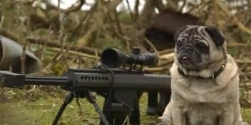 is pug a sniper pug is a total maverick