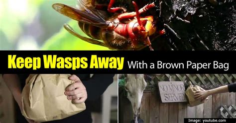 how to keep wasps away from house how to keep wasps away from house 28 images how to