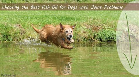 best fish for dogs best fish for dogs with joint problems top 2 revealed