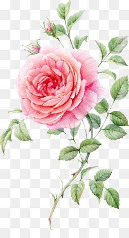 mawar png  gratis mawar merah muda bunga clip art