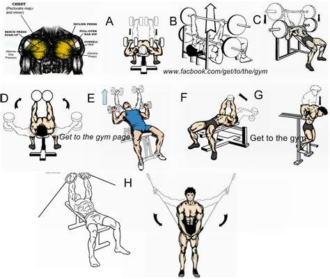 chest exercises workouts weight lifting