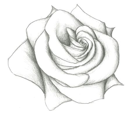 Drawing Roses by Easy Pencil Drawing Of 12 Model Easy Pencil Drawings