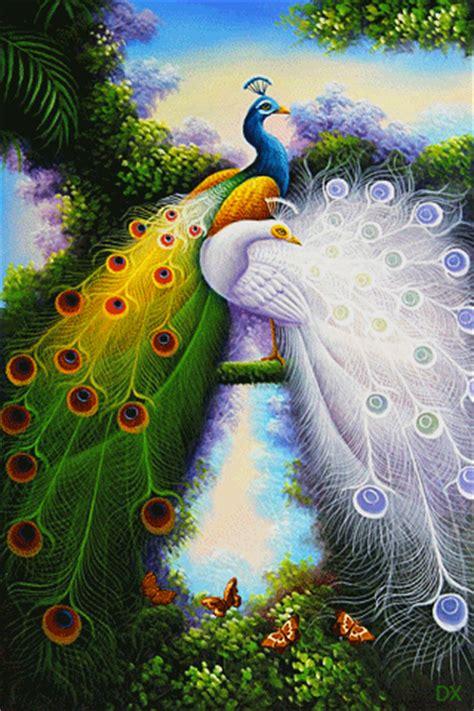 imagenes hermosas reales gif animados pavo real fotos bonitas de aves pinterest