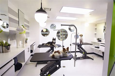 pet house dog salon pooch pering beverly hills has gone to the dogs