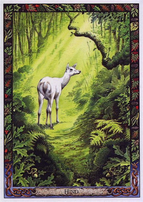 the druid animal oracle 1859060072 druid animal oracle deck by bill worthington lrs the