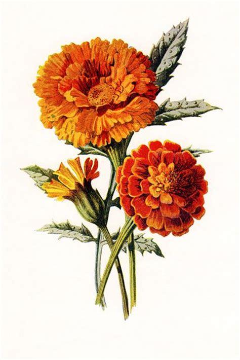 october flower tattoo marigolds vintage field garden june 2013 tatoos