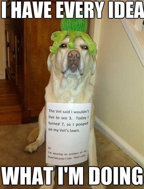 Dog Memes Funny - meme awesome dog