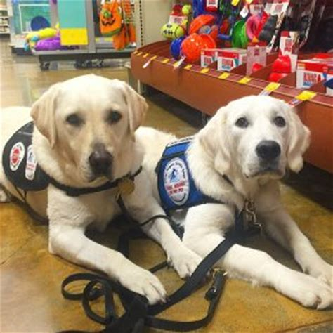 places that service dogs service dogs